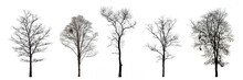 Collection Of Trees Without Le...