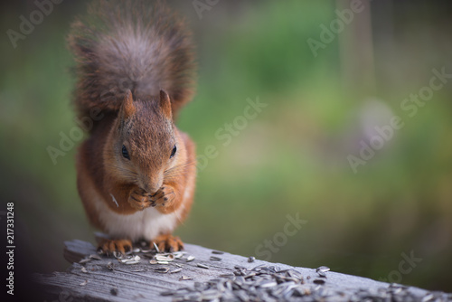 Foto op Canvas Eekhoorn Squirrel4