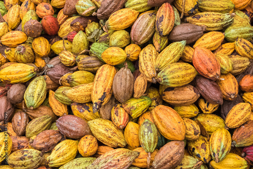 Cacao pods in Sao Tome and Principe, heap of pods of cocoa put on the ground for the drying