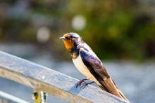 Bird At St Mawes 2