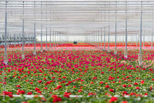 Photographie flowers in a greenhouse