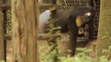Mandrill In Background Framed ...
