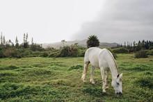 Horses In Field Grazing