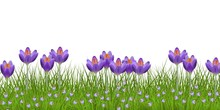 Spring Floral Border With Bright Purple Crocuses And Little Blue Wild Flowers On Fresh Green Grass Isolated On White Background - Decorative Frame With Seasonal Blooms In Vector Illustration.