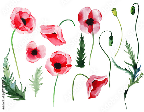 Bright beautiful wonderful summer autumn herbal floral red poppies flowers with green leaves seamless elements watercolor hand illustration. Perfect for greetings card, textile, wallpapers, banners