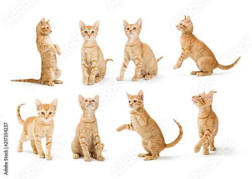 Cute Orange Tabby Kitten in Different Positions