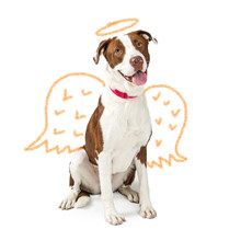 Innocent Dog With Drawn Angel ...