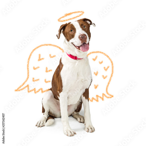 Innocent Dog With Drawn Angel Wings Wallpaper Mural
