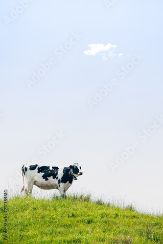 Tableau sur Toile Black and White Cow Standing on Top of the Meadow in Summer