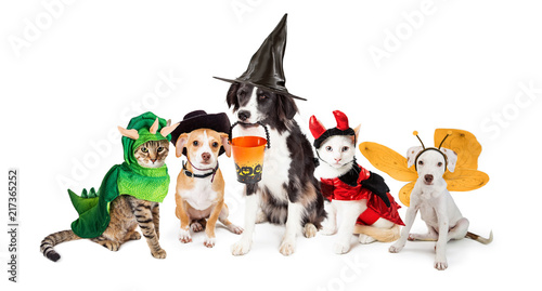 Foto Row of Cats and Dogs in Halloween Costumes