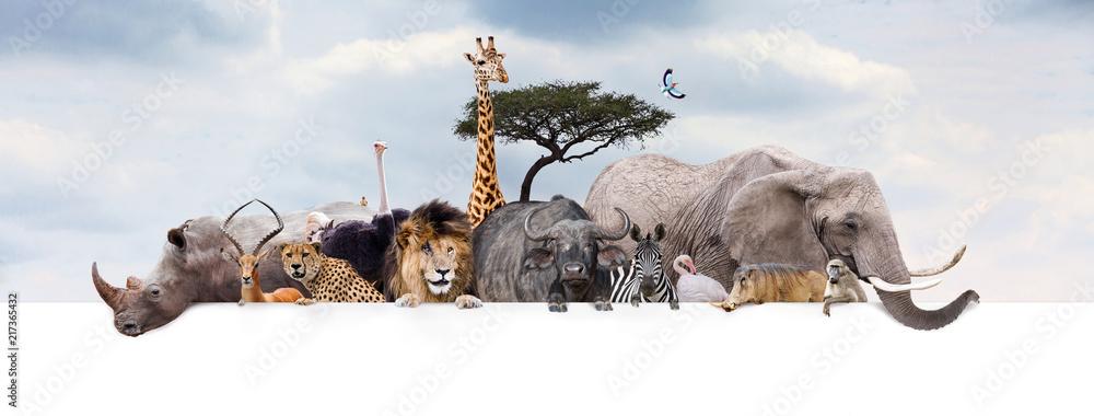 Fototapeta Safari Zoo Animals Over Web Banner