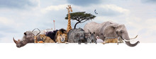 Safari Zoo Animals Over Web Ba...