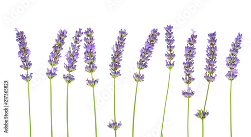 Lavender flowers isolated on white background. Canvas-taulu