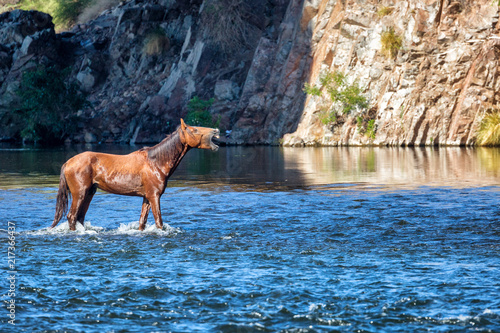 Wild Horse Neighing While in River Fototapet