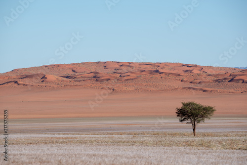 Foto op Aluminium Zalm Lone tree in red sand dune desert and soft grass landscape, Namibia