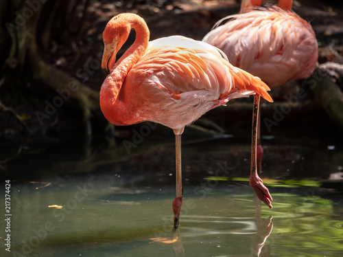 Tuinposter Flamingo flamingo stands on one leg for you