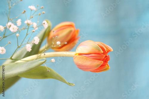 Fototapety, obrazy: オレンジ色のチューリップ