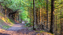 Sunny Wooded Trail In Northern...