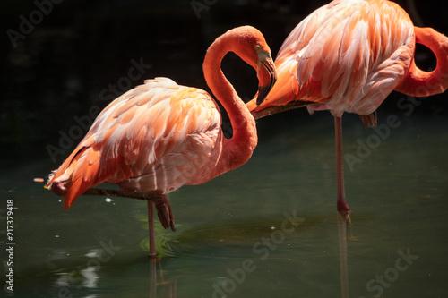Foto op Aluminium Flamingo vibrant flamingo gives you a classic pose