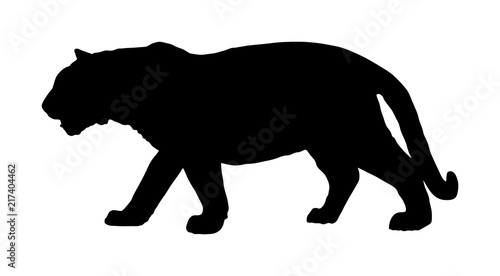 Foto Tiger vector silhouette illustration isolated on white background