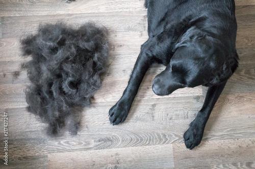 Fotografia  Dog and Its Fur