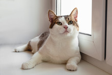Portrait Of Adorable White Tabby Cat With Green Eyes Near To The Window, Front View.