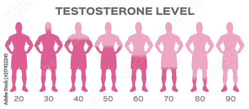 Photo testosterone hormone level vector / man