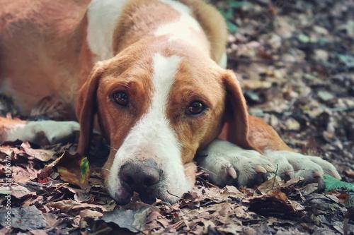 Foto  Stray dog