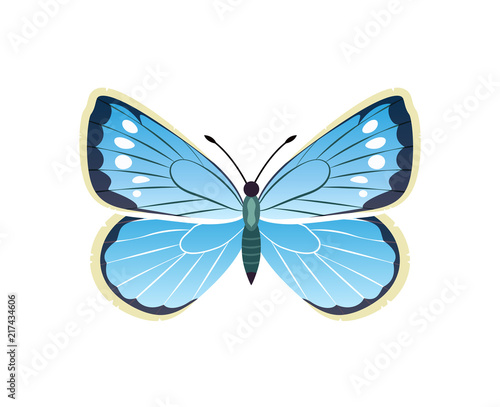 Fotografie, Obraz  Morpho Peleides Blue Butterfly Vector Illustration