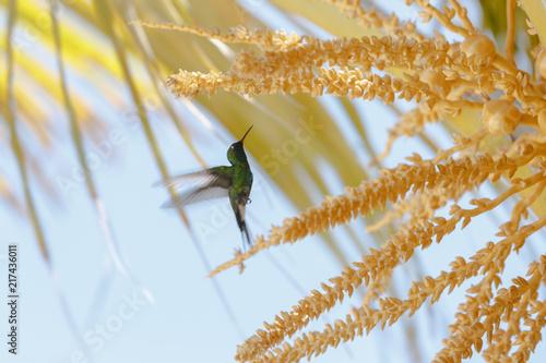 Fotografía  colibri 2