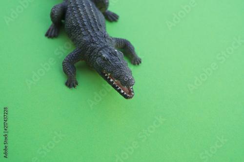 Foto op Plexiglas Krokodil An animal is a children's toy.