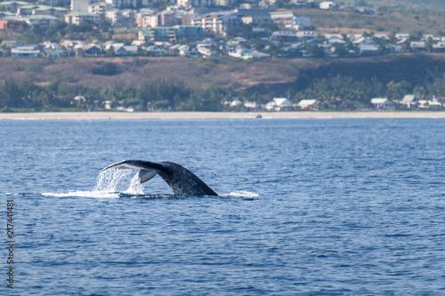 Poster Antarctica queue de baleine à bosse à la réunion