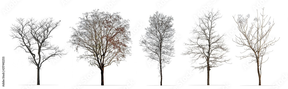 Fototapeta Set of winter trees without leaves isolated on white background