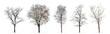 Leinwandbild Motiv Set of winter trees without leaves isolated on white background