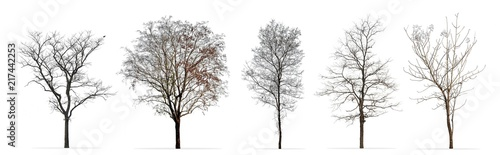 obraz dibond Set of winter trees without leaves isolated on white background