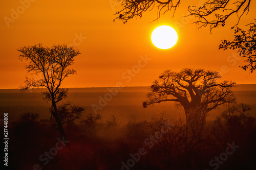 Photo Baobab tree in sunrise landscape in Kruger National park, South Africa ; Specie