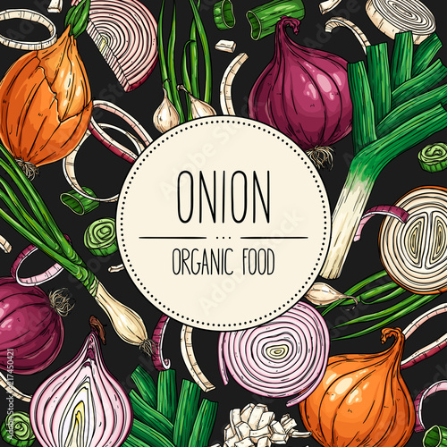 Fototapeta Vector hand-drawn banner onion bulb, slices, halves, pieces, green onion and leek. Vector illustration for shop, book, emblem, menu, label. obraz