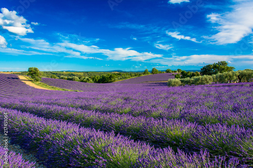 Foto op Canvas Lavendel Champs de lavande en Haute-Provence