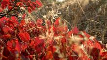 Крымские цветы