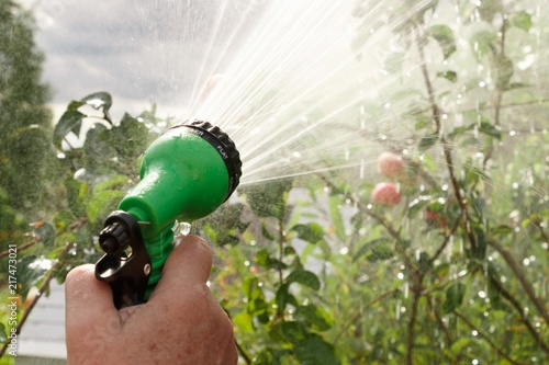 Hand holds manual sprinkler for irrigation and watering garden by water jets