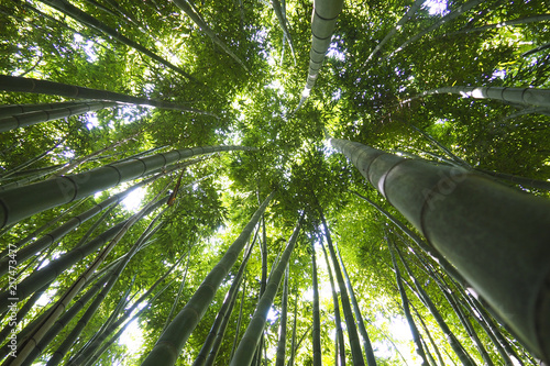 Foto op Plexiglas Bamboe Bamboo forest in Thailand in Southeast Asia