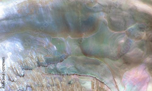 Foto auf Gartenposter Wasser Sea shell background.
