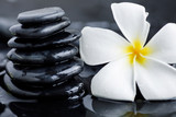 Fototapeta Rocks - Plumeria flower and spa stones