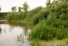 Pond With Marsh Grass And Reeds During The Day