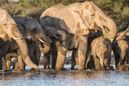 Photo  elephant herd drinking at waterhole
