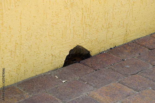 Hole in the wall near the floor. The mouse mink