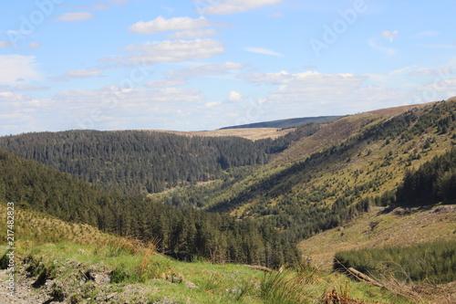 Nature Woodland Backgroind Landscape