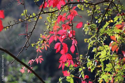 Poster Nature Autumn leaves picture taken in Belgium