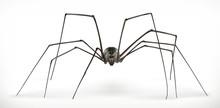 Realistic Spider, Halloween. 3...