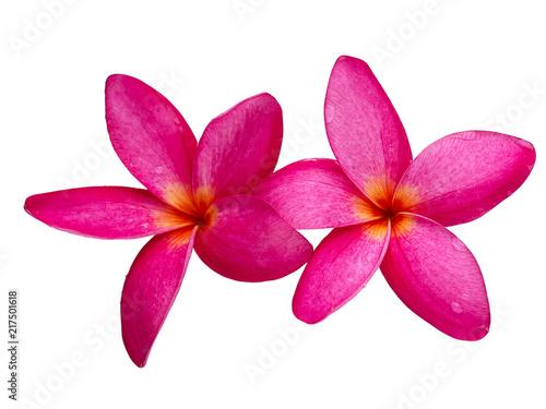 The most beatiful plumeria flowers.
